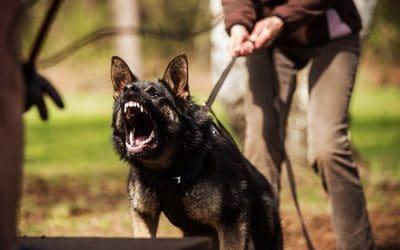 Dog Bite Injuries